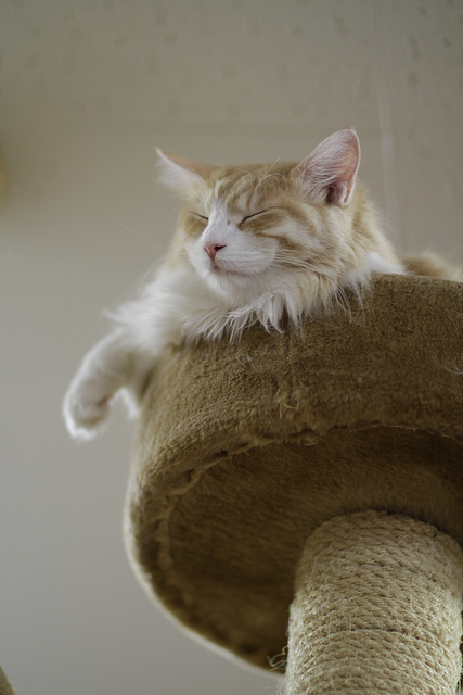 Cat relaxing in cat tree