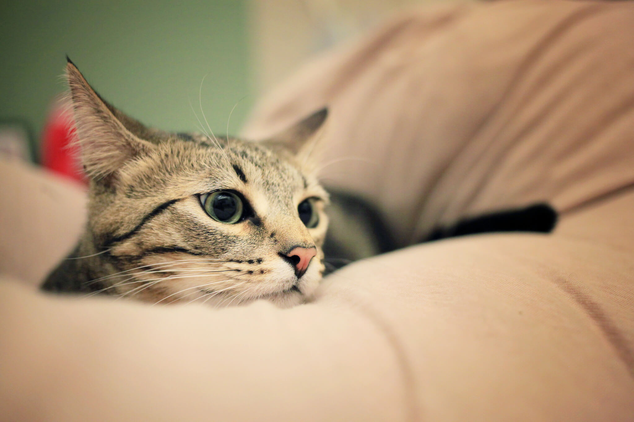 Why Your Cat Wakes You Up at Night