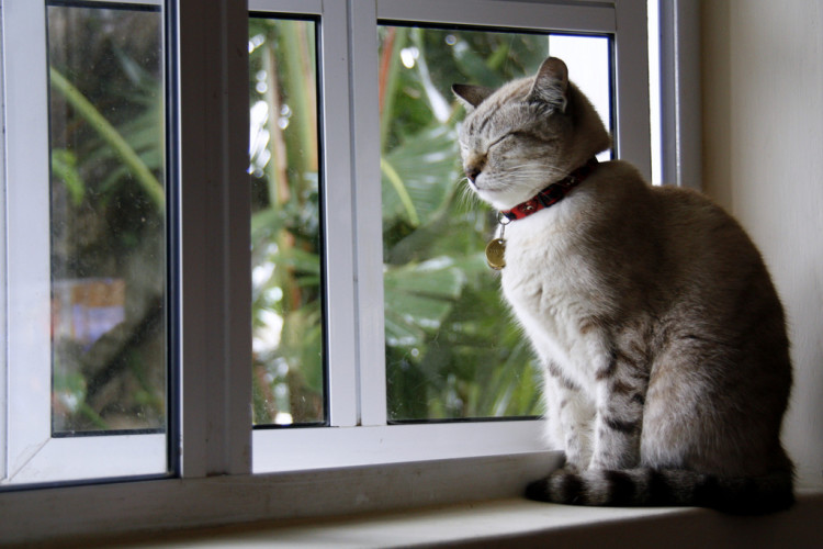 Reduce feline separation anxiety while on vacation
