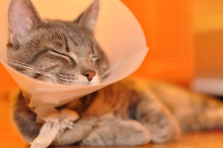 When Should I Get My Cat Fixed?