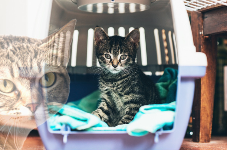 pet loss, adoption