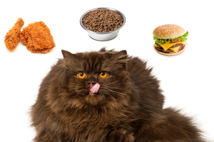 Why having an overweight cat is bad