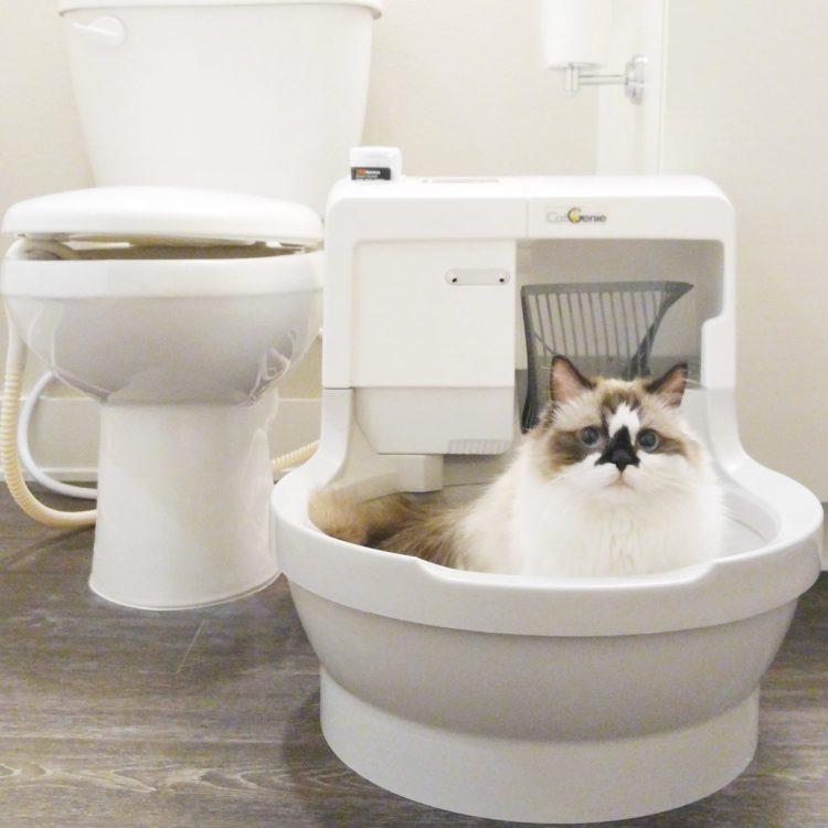CatGenie's Famous Cat Fans:
