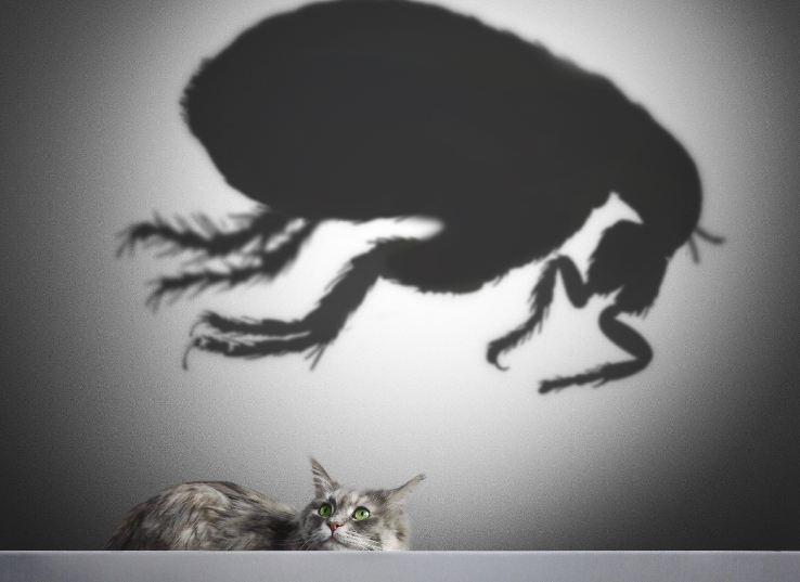 The Mighty Scourge: The Tiny Devil Known as The Flea