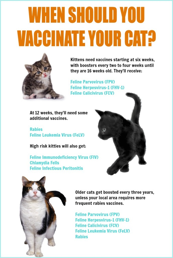 Tips for Cat Vaccinations