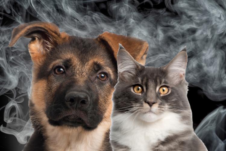 e-cigarettes, pets