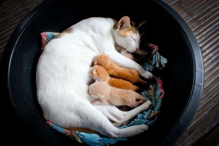 helping kittens