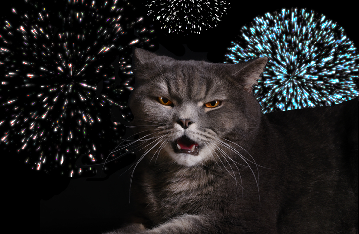 Fireworks & Fluffy: How To Keep Your Cat Calm During the 4th of July