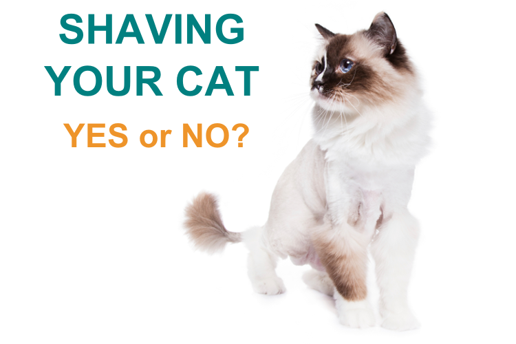 shave your cat