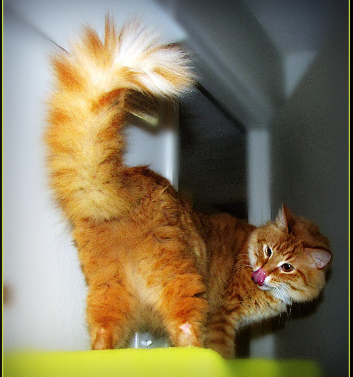 happycat-by-TrishHamme
