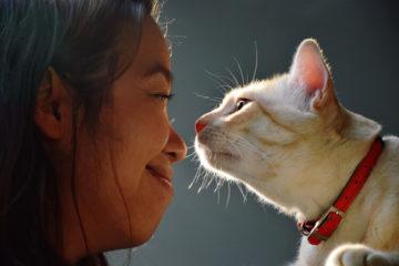 choosing the right cat collar
