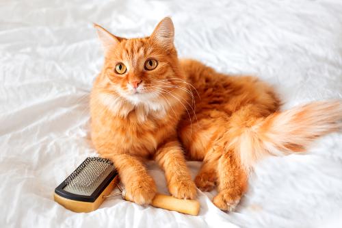 cat with brush