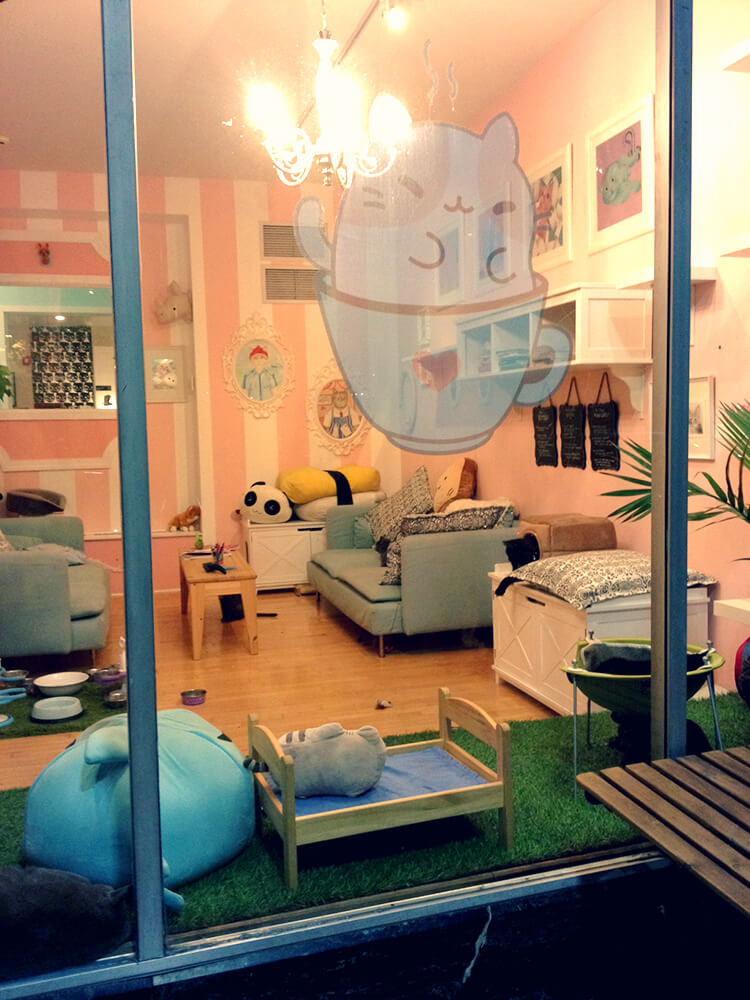 Kawaii Kitty Cafe: The Ultimate Cat-Lover's Experience
