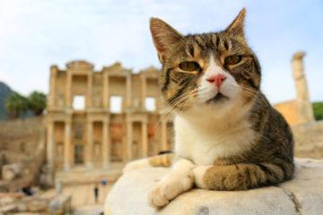 historic cats