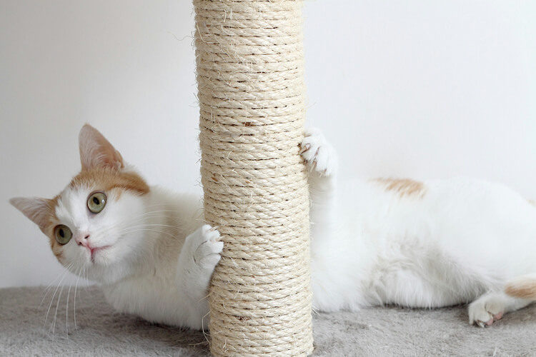 Should You Declaw Your Cat? The Facts About Declawing