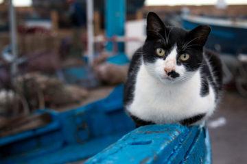 history-cats-part-2