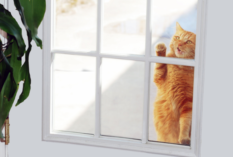 From The Street To The Suite: Transitioning A Stray Cat Into Your Home