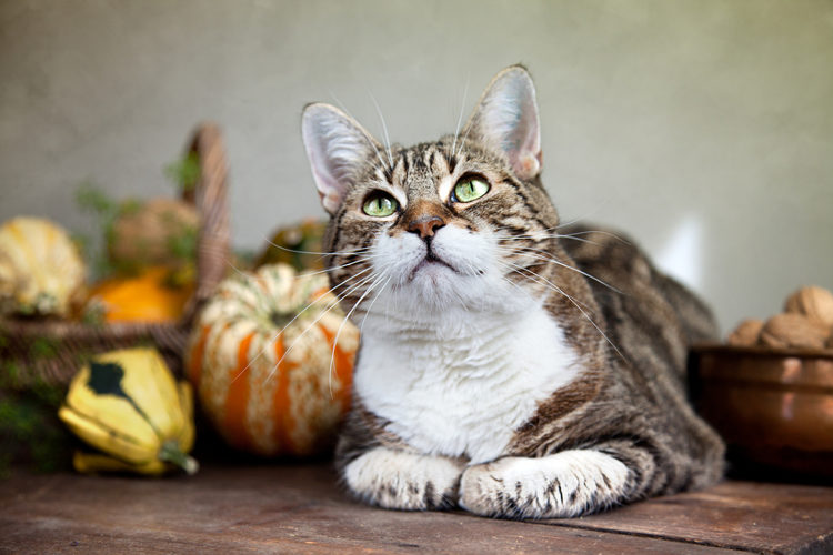 A Pinning Guide To Cat Safe Thanksgiving Centerpieces