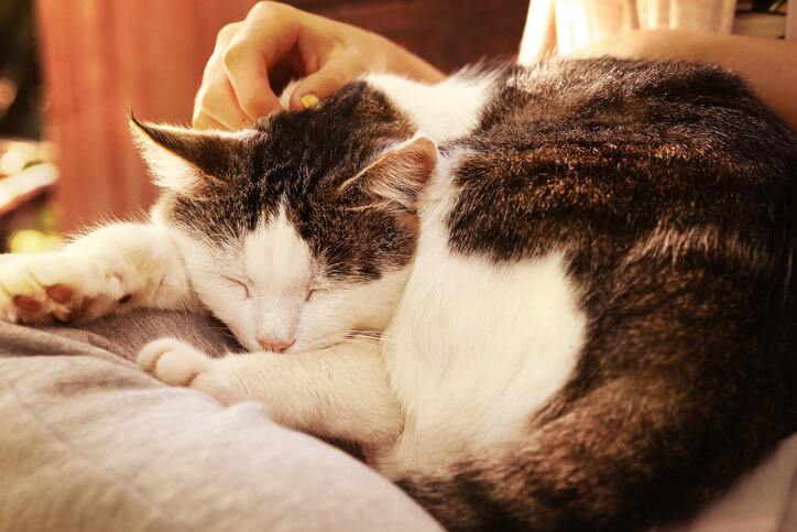 What To Look Out For In Your Senior Cat