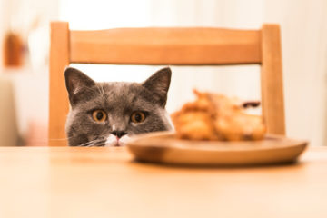 Will Those Thanksgiving Left-Overs Poison Your Cat?