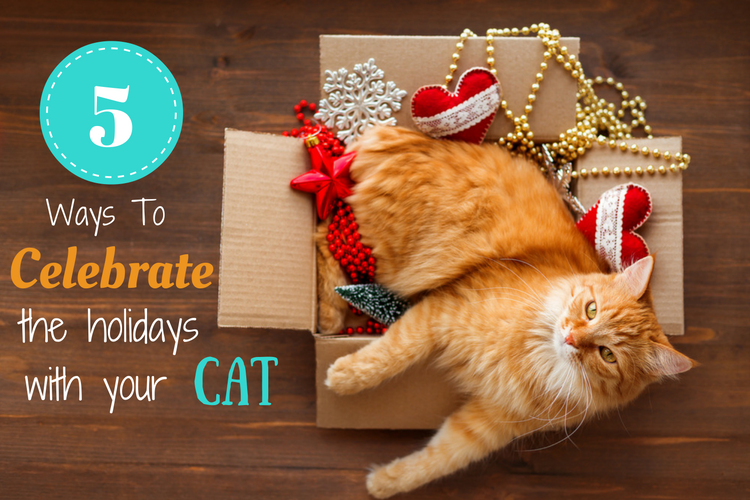 5 Ways To Celebrate The Holidays With Your Cat
