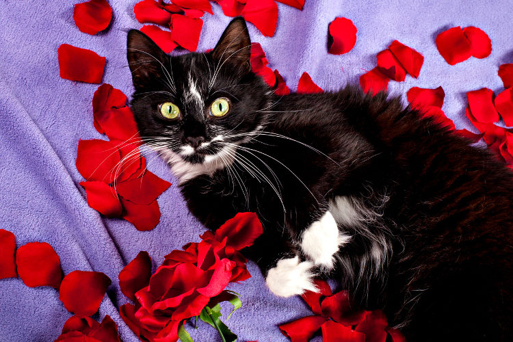 Valentine's Day The Cat Lover's Way