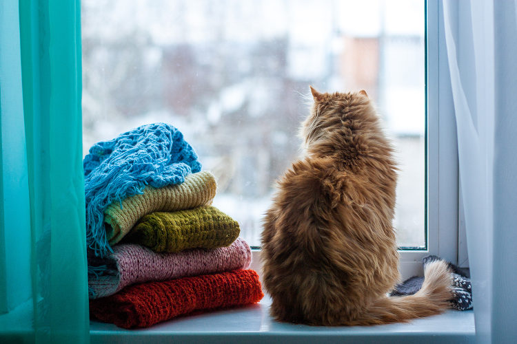Preparing Your Cats For A Winter Storm