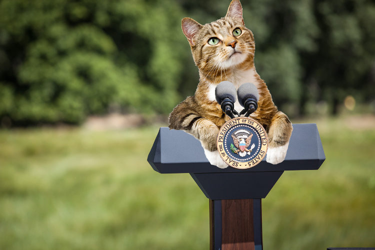 Purr-esidential Cats of the White House