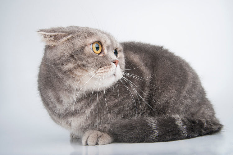Cat Anxiety: How to Recognize & Treat It