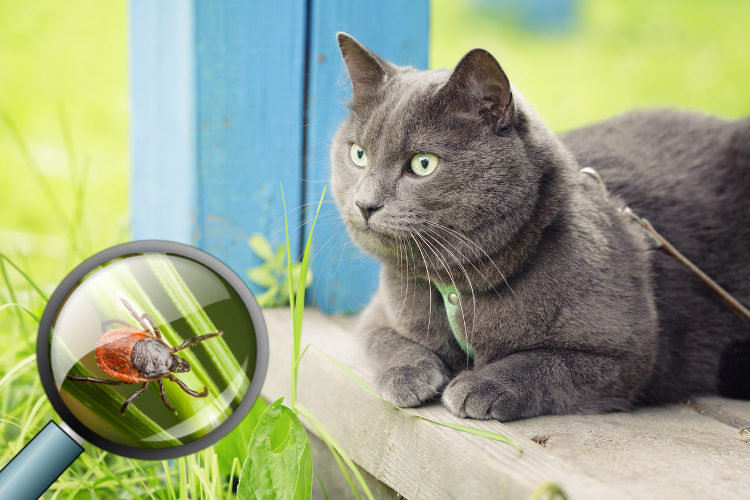When Life Gives Your Cat Lyme Disease