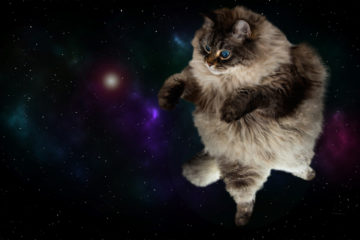 Badass cats in science fiction