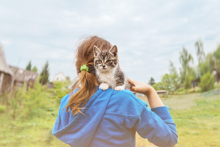 5 Ways To Reduce Kitty's Carbon Paw-Print