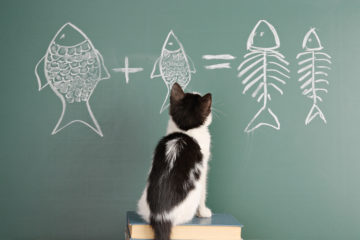 Do Cats Reminisce And Remember? Japanese Scientists Say Yes