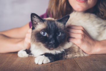 The Responsible Cat Parent - Dos & Don'ts of Cat Parenthood