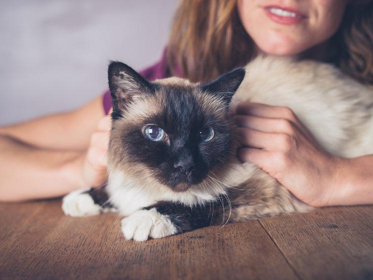 The Responsible Cat Parent – Dos & Don'ts of Cat Parenthood