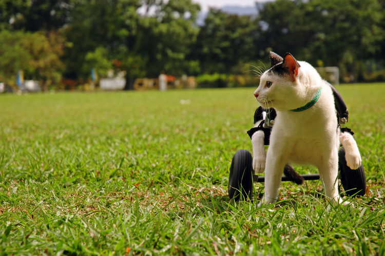 4 Inspirational Famous Cats With Disabilities