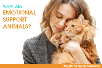 Emotional Support Animals: Making Your Cat An Official Service Pet