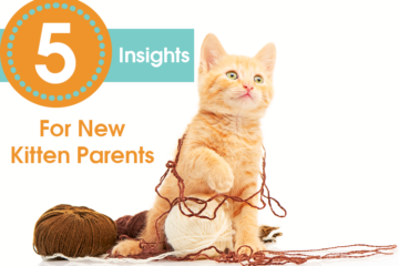 5 Insights For New Kitten Parents