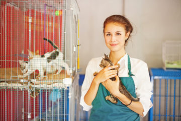 What to Ask a Shelter When Adopting a Cat