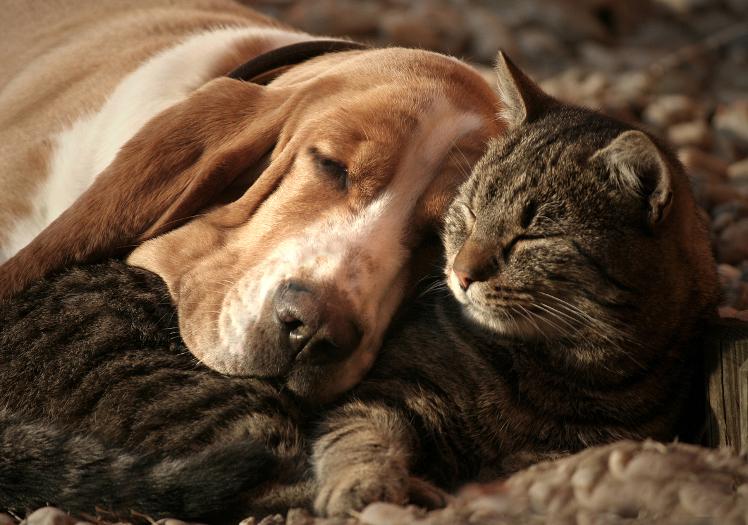 3 Adorable Interspecies Best Friends