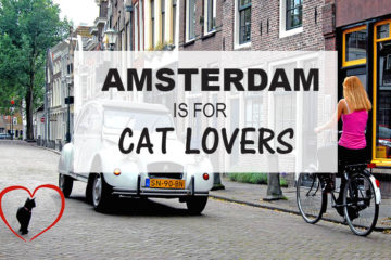 Cat Lovers Travel Highlight: Amsterdam