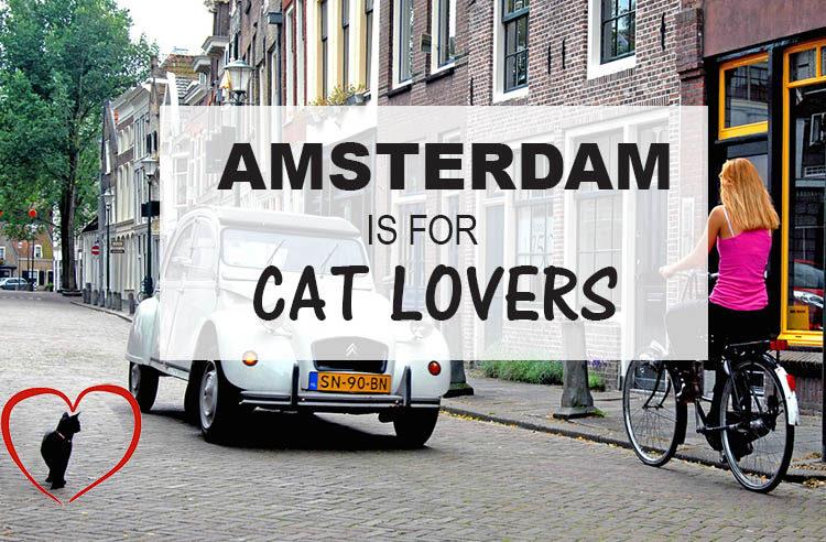 Cat Lovers Travel Highlight: Amsterdam