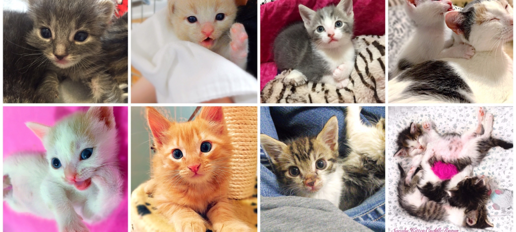 Kitten Livestreams: Get Your Daily Dose of Cute