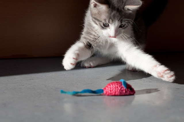 Why cats knock stuff over 2