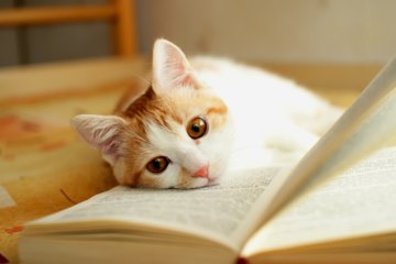 Books for Cat Lovers cover