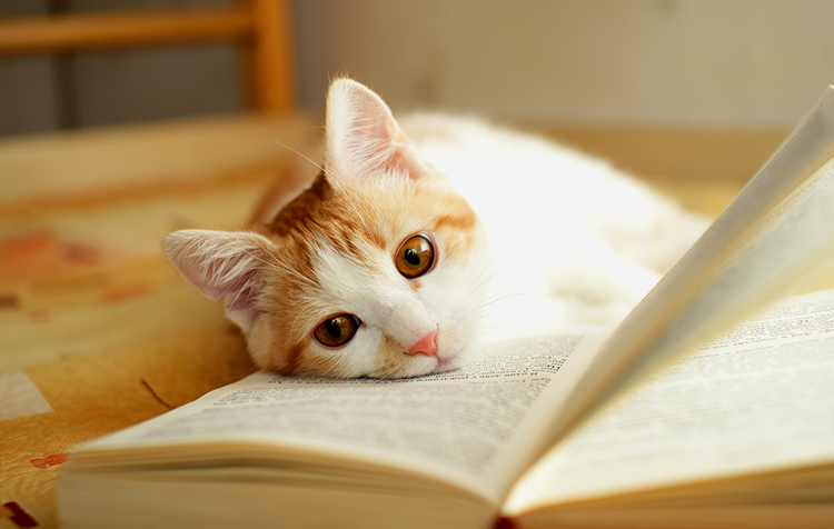 Top Books for People Who Love Cats