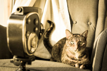 Famous Felines In Film And Television