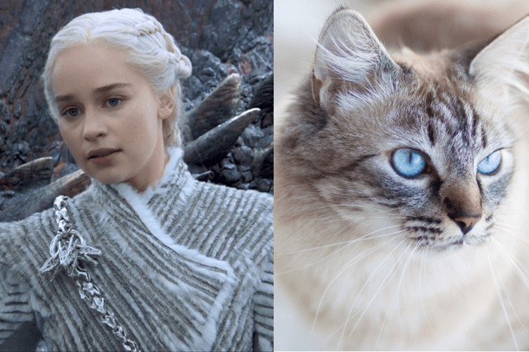 Cats Who Look Like Game of Thrones Characters
