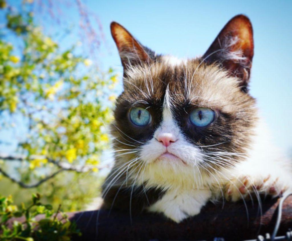 Grumpycat 1