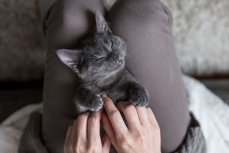 Acupuncture For Your Cat? How Holistic Care Can Help Kitty